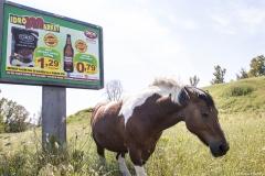cavallo10s