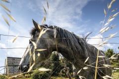 cavallo12s