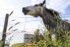 cavallo13s