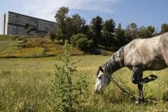 cavallo5s