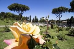 Roseto comunale di Roma - (c) Mauro Monti