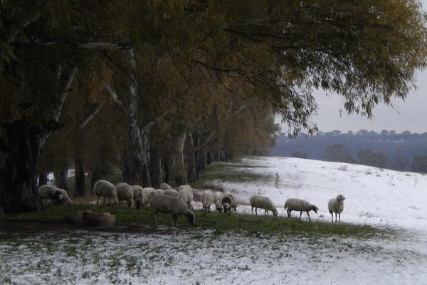 Neve a Corviale