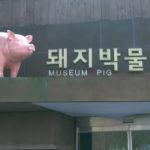 In Corea del Sud un museo dedicato al maiale