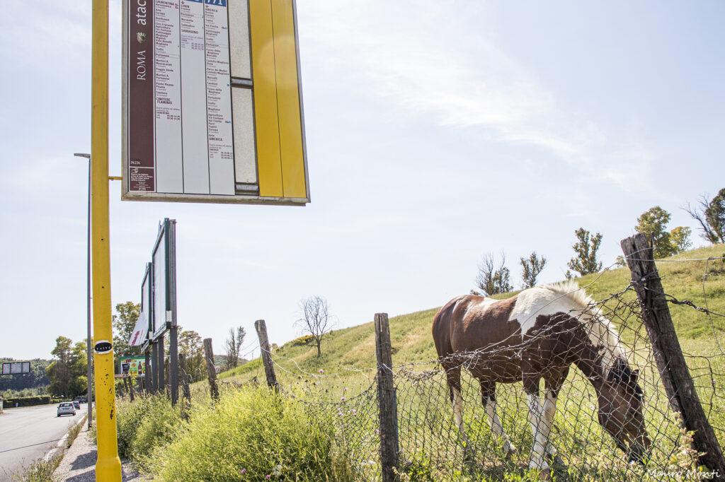 Cavalli al confine - (c) Foto Mauro Monti